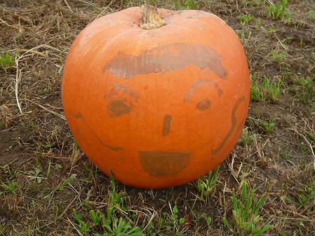 かぼちゃ13(2012.9.19)