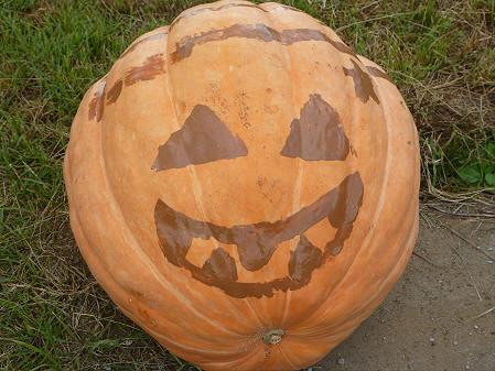 かぼちゃ19(2012.9.19)