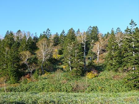 黒谷地湿原19(2012.10.8)