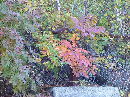 秋のアスピーテライン10(2012.10.8)