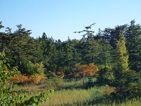 樹海ライン17(2012.10.8)