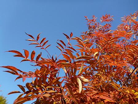 紅葉の八幡平へvol.226(2012.10.16)