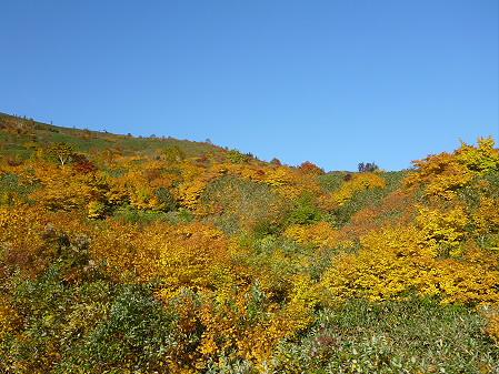 紅葉の八幡平へvol.232(2012.10.16)