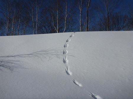 八幡平樹氷vol.2 02(2012.3.1)