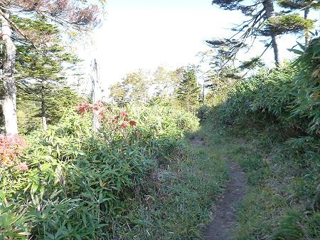 紅葉の八幡平へvol.435(2012.10.16)