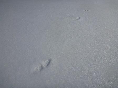 八幡平樹氷vol.4 31(2012.3.1)