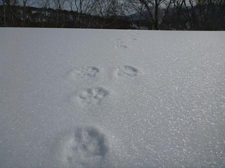 八幡平樹氷vol.4 35(2012.3.1)