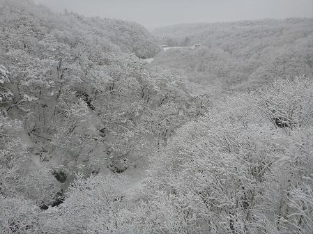 森の大橋05(2012.3.28)