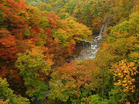 森の大橋07(2012.10.23)