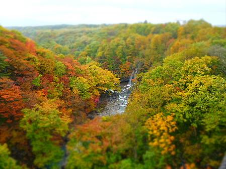 森の大橋08(2012.10.23)