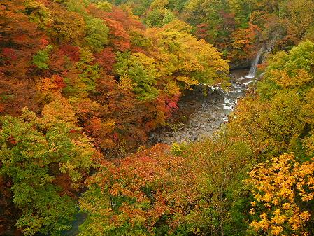 森の大橋09(2012.10.23)