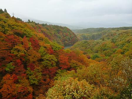 森の大橋11(2012.10.23)