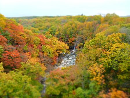 森の大橋06(2012.10.25)
