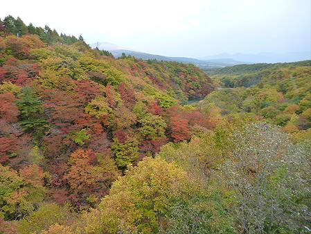 森の大橋08(2012.10.25)