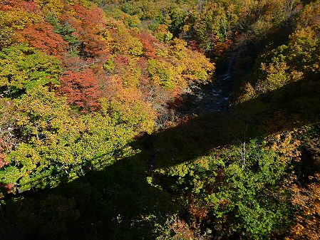 森の大橋06(2012.10.26)