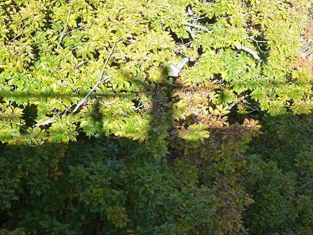 森の大橋07(2012.10.26)