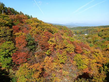 森の大橋03(2012.10.26)