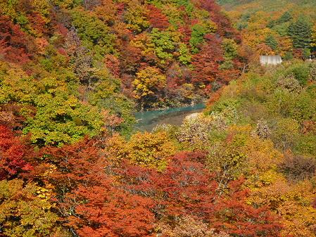 森の大橋04(2012.10.26)