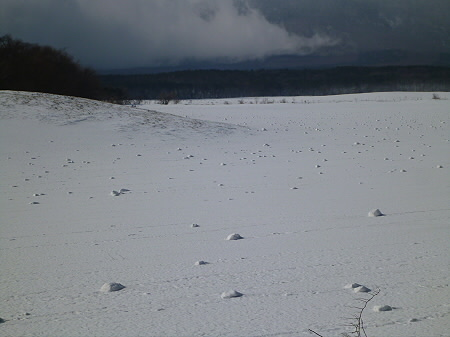上坊牧野の自然雪玉02(2012.4.5)