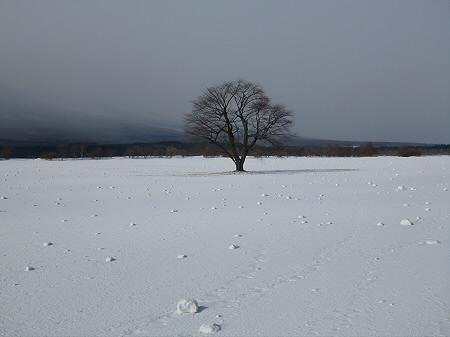 上坊牧野の自然雪玉05(2012.4.5)