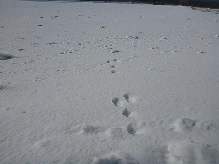 上坊牧野の自然雪玉06(2012.4.5)