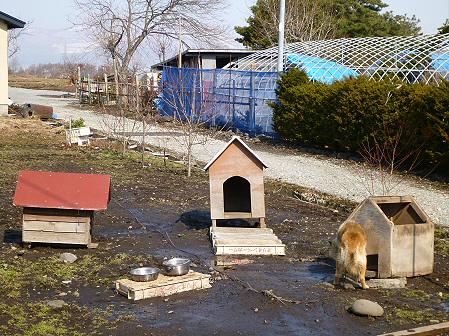 平笠の犬小屋スリー04(2012.4.10)
