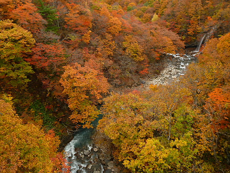 森の大橋08(2012.10.30)