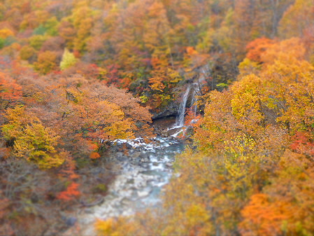 森の大橋09(2012.10.30)