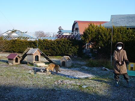 犬小屋スリー01(2012.12.5)