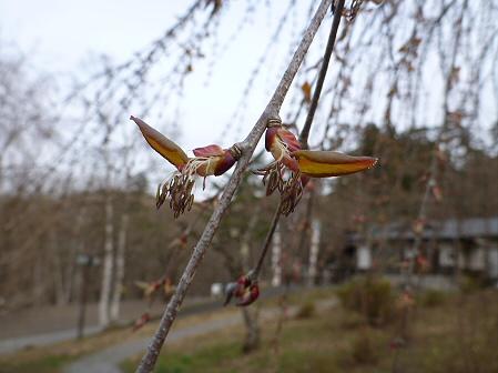 桜松公園02(2012.4.30)