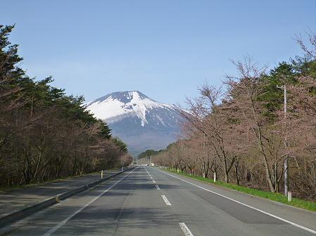 上坊牧野入口付近の桜並木01(2012.5.1)