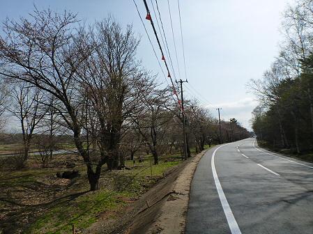 明治百年記念公園の桜01(2012.5.1)