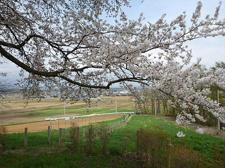 為内の一本桜10(2012.5.2)