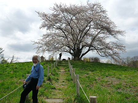 為内の一本桜11(2012.5.2)
