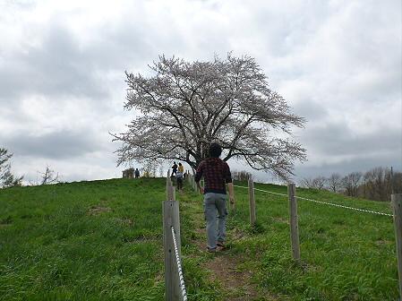 為内の一本桜12(2012.5.2)
