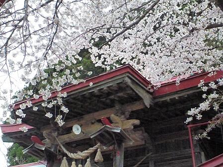 伊那々伊澤神社の桜04(2012.5.2)