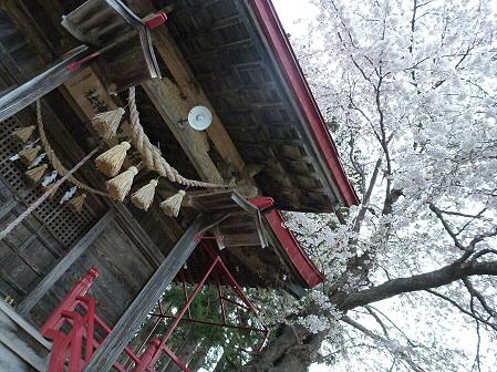 伊那々伊澤神社の桜06(2012.5.2)