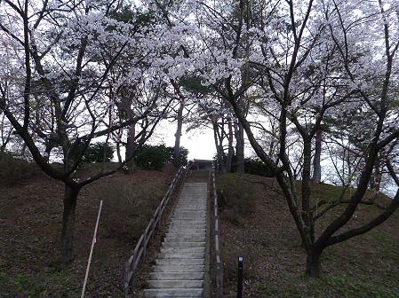 舘公園の桜06(2012.5.2)