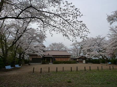 舘公園の桜08(2012.5.2)
