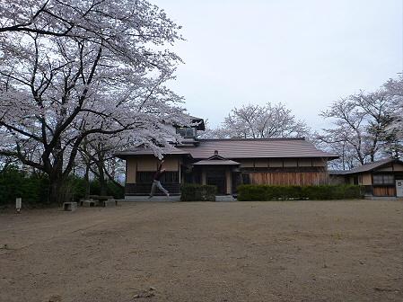 舘公園の桜10(2012.5.2)