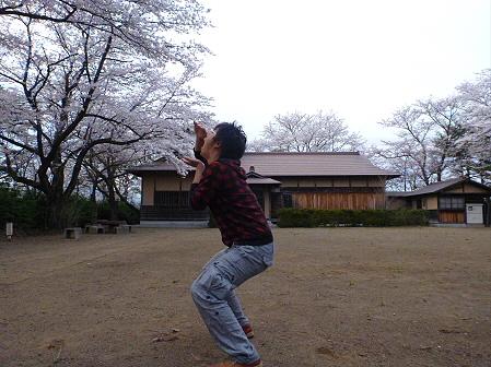 舘公園の桜01(2012.5.2)