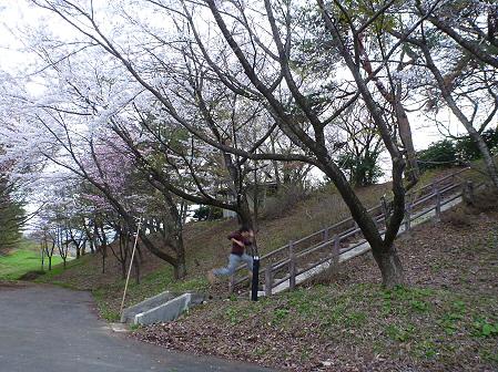 舘公園の桜16(2012.5.2)
