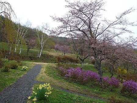桜松公園の桜02(2012.5.3)
