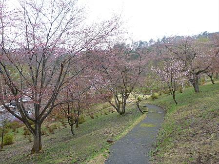 桜松公園の桜05(2012.5.3)