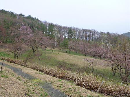 桜松公園の桜09(2012.5.3)