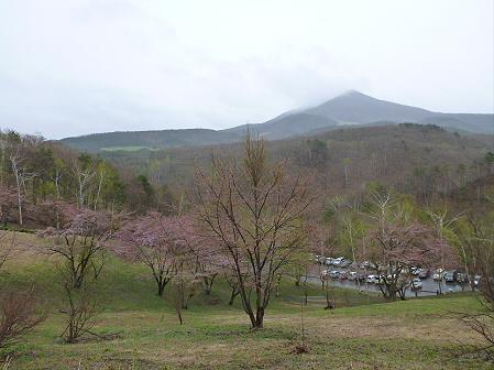 桜松公園の桜10(2012.5.3)