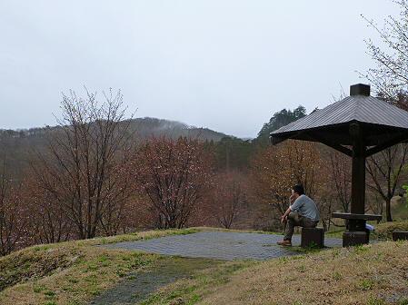 桜松公園の桜11(2012.5.3)