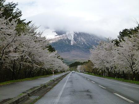 上坊牧野入口付近の桜並木01(2012.5.5)