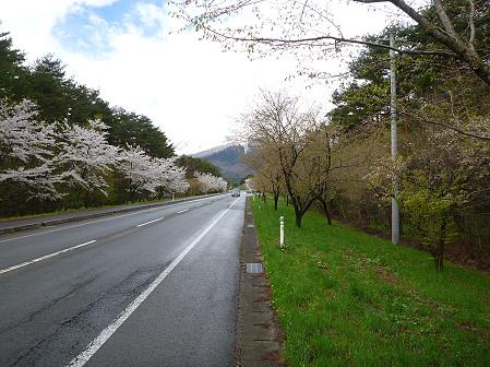 上坊牧野入口付近の桜並木03(2012.5.5)