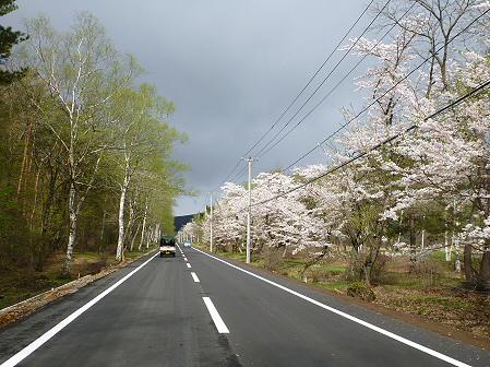 明治百年記念公園の桜01(2012.5.5)